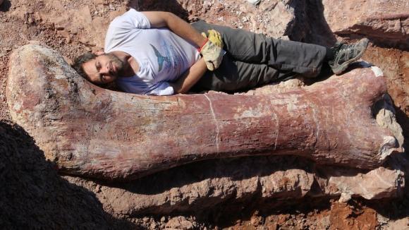 Kost největšího dinosaura