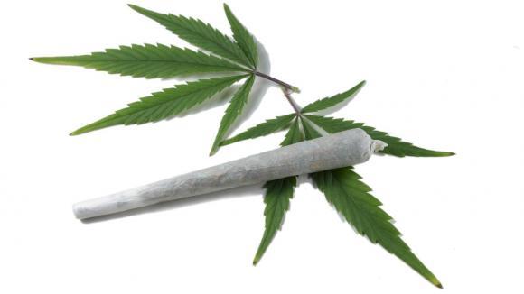 Za co všechno může marihuana?