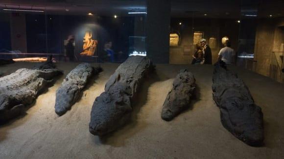 Mumifikovaní krokodýli