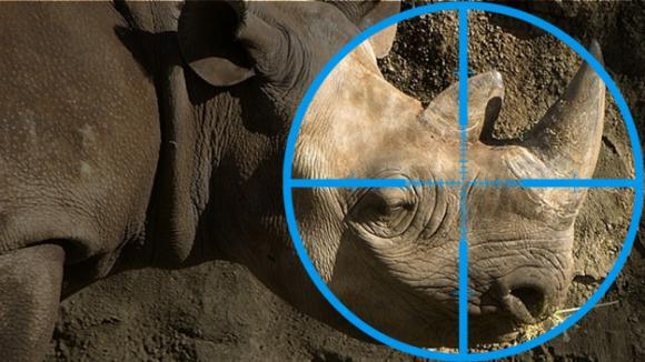 Nosorožec v zaměřovači