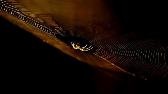 pavucina - vlákno, které zatím člověk neumí vyrobit