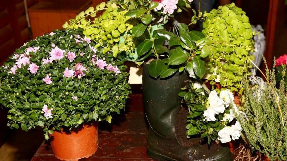 Ze starého harampádí stylové květináče