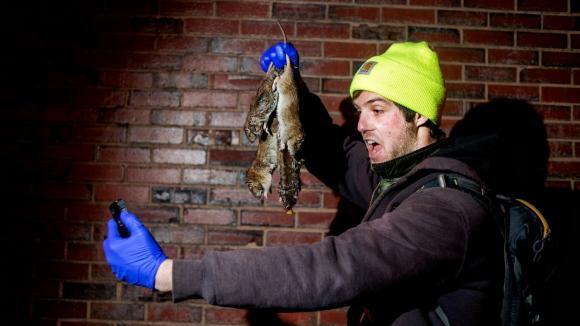 Krysy vládnou New Yorku - Obrázek 5