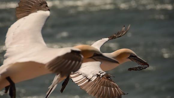 terej bílý - mořský elegán