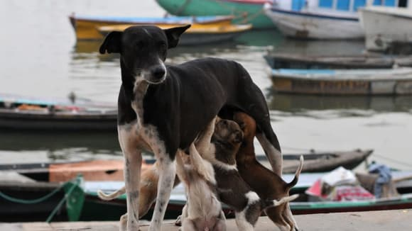 Psí rodinka