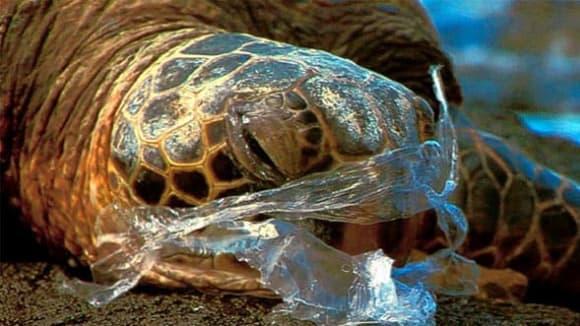 Želva  a plast