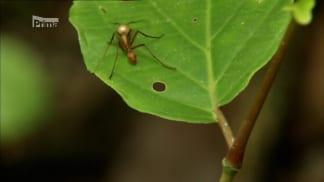Nelítostné války hmyzu II 1 - mravenec versus pavouk