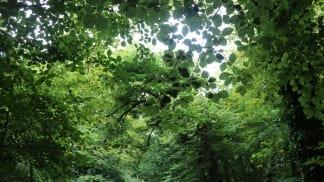 Tajemný svět stromů