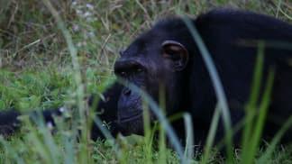 Gorilí království