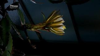 Království rostlin 3 - kaktusy a netopýři
