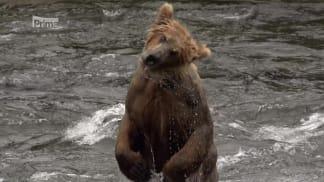 Národní parky Severní Ameriky 8 - medvěd grizzly