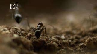 Přírodní krásy Divokého západu 1 - pouštní mravenci