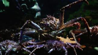 3. epizoda - Krab kamčatský