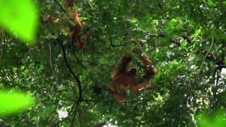 5. epizoda - Národy z pralesa a popela