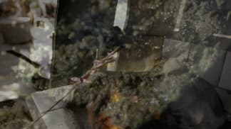 Anthony Bourdain: Neznámé končiny