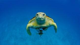 Bahamské hlubiny