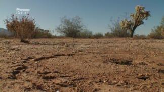 Národní parky Severní Ameriky 7 - mravenčí hostina