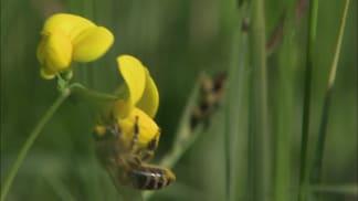 7. epizoda - Smrt včely medonosné