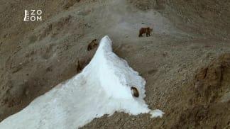 Přírodní krásy Divokého západu 2 - grizzly