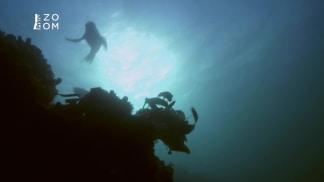 Smrtící instinkty 3 - velký bílý žralok a tuleň