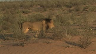 3. epizoda - Žhavé písky Kalahari