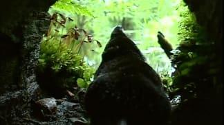 13. epizoda - Rejsec vodní: Miniaturní predátor