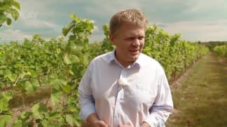 Vinaři - založit vinohrad