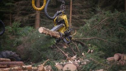 Strom dokáže harvestor naporcovat doslova za pár sekund. 5
