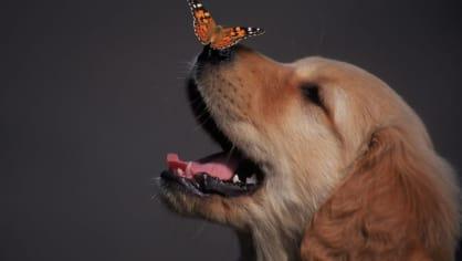 Extrémně roztomilé fotografie vyvolávají agresivitu - Obrázek 6