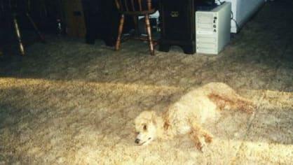 Pořídili si koberec k psovi, nebo psa ke koberci?