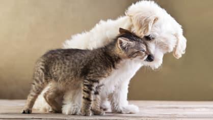 Extrémně roztomilé fotografie vyvolávají agresivitu - Obrázek 8