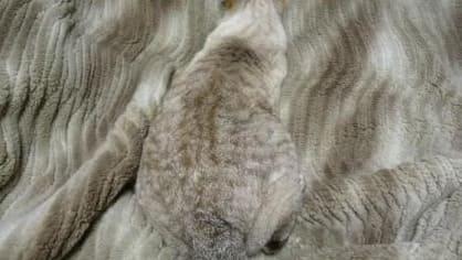 Dokonalá schovka pro kočky, co chtějí mít na chvíli klid od mazlení