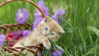 Extrémně roztomilé fotografie vyvolávají agresivitu - Obrázek 19