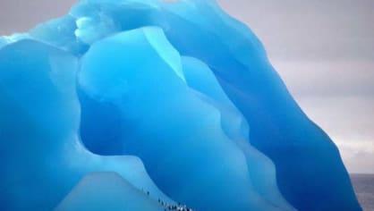 Tučňáci na ledovci