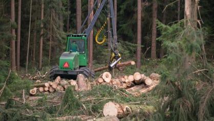 Strom dokáže harvestor naporcovat doslova za pár sekund. 6