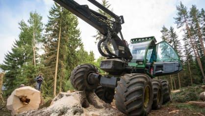 Strom dokáže harvestor naporcovat doslova za pár sekund. 1