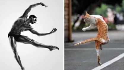 chlapici versus kocky - Obrázek 8
