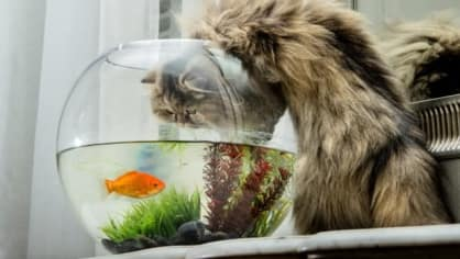 Šmírovat kočičku se rozhodně vyplácí, pobavíte se!