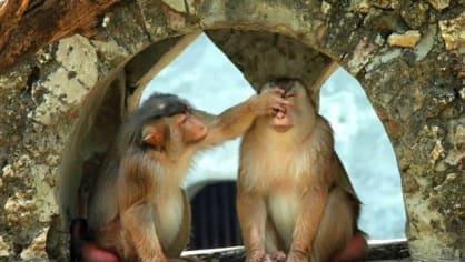 Jestli ti smrdím, tak ti zacpu nos, koupat se nejdu!