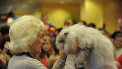 V Praze se o víkendu konala Mezinárodní výstava koček, na níž se postupně ve dvou dnech představilo celkem 360 mazlíčků. Dalších zhruba 50 koček ukázaly útulky. Návštěvníci tak měli možnost odejít z výstavy s novým přírůstkem do rodiny.