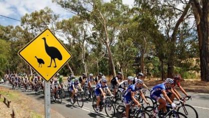 Cyklisté, mějte se na pozoru, emu běhají přes silnici!