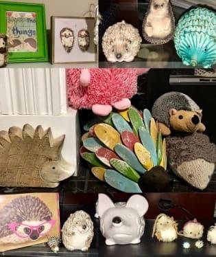 Sbírá ježky všeho druhu