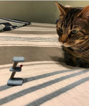 Kočička má trochu malou hračku.