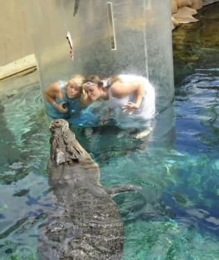 Potápění s krokodýlem