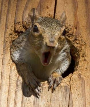Už jste někdy viděli naštvanou veverku? Někdo jí asi ukradl oříšek :-)