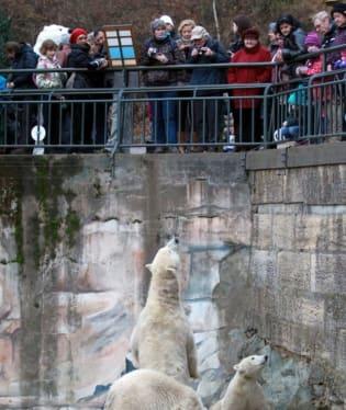 Brněnská medvíďata oslavila první narozeniny