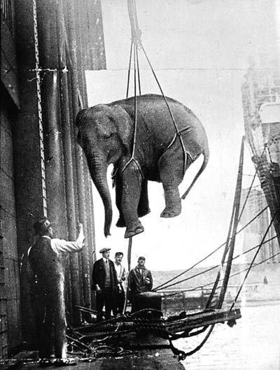 Transport cirkusového slona. (30. léta)