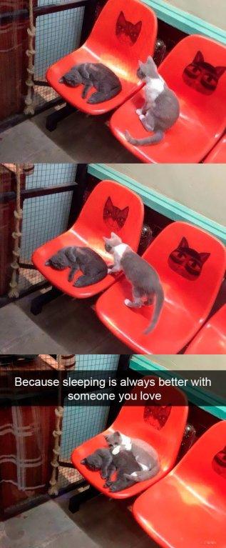 Protože spí se vám vždy lépe po boku někoho, koho milujete