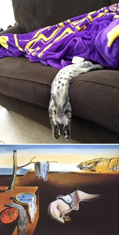 Tekutá kočka jak od Dalího