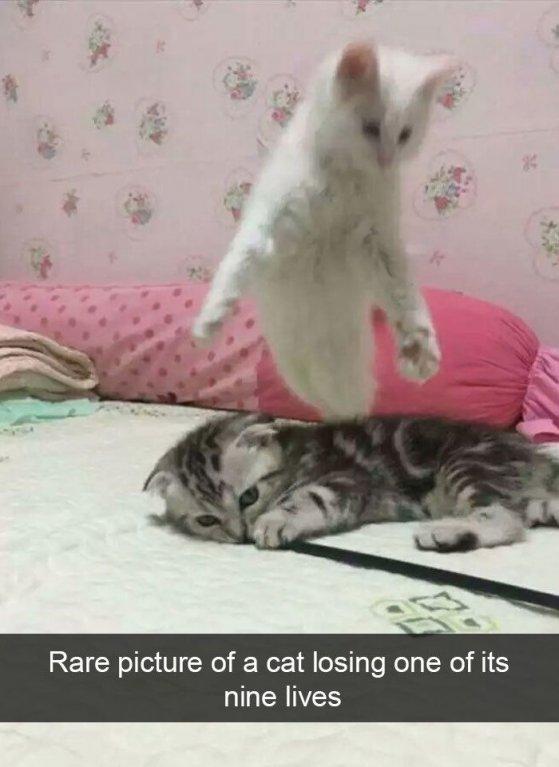 Vzácný snímek kočky, jak přichází o jeden ze svých devíti životů
